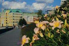 Schöne Ansichten eines Blumenbeets auf dem Krimdamm Lizenzfreie Stockbilder