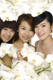 Schöne asiatische Frau drei Lizenzfreies Stockbild