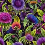 Schöne Aster blüht in den verschiedenen hellen Farben mit grünen Blättern auf schwarzem Hintergrund Nahtloses Blumenmuster Lizenzfreie Stockfotografie