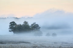 Schöne Autumn Fall-Landschaftslandschaftwi Sonnenaufgang des starken Nebels Stockfoto