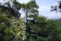 Schöne Bäume Stockfoto