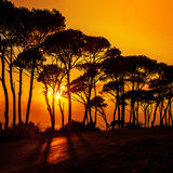 Schöne Bäume auf Sonnenuntergang lizenzfreies stockbild