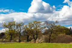 Schöne Bäume in der Essex-Landschaft im Frühjahr Lizenzfreies Stockfoto