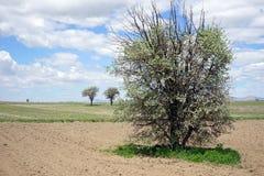Schöne Bäume in der gepflogenen Erde Stockbild