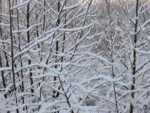Schöne Bäume im Winter Stockbild