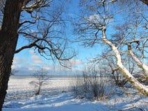 Schöne Bäume nahe Curonian spucken im Winter, Litauen Stockfotografie