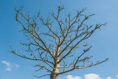 Schöne Bäume in Richmond-Park London lizenzfreies stockfoto