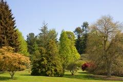 Schöne Bäume u. blauer Himmel lizenzfreie stockbilder