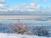 Schöne Büsche nahe Curonian spucken im Winter, Litauen Lizenzfreies Stockbild