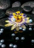 Schöne Badekurorteinstellung der Passionsblumenblume auf Zenbasaltsteinen Stockfotos