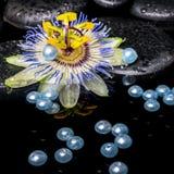 Schöne Badekurorteinstellung der Passionsblumenblume, Zensteine mit Tropfen Stockbild