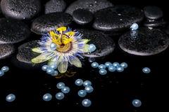 Schöne Badekurorteinstellung der Passionsblumenblume, Zensteine mit Tropfen Stockfoto