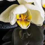 Schöne Badekurorteinstellung der weißen Orchidee (Phalaenopsis), Zensteine Stockfotos