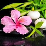 Schöne Badekurorteinstellung des rosa Hibiscus blühen, die Bambus Zweige Lizenzfreies Stockfoto