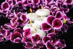 Schöne Badekurortzusammensetzung blühenden dunklen purpurroten Pelargonie flowe Stockfotos