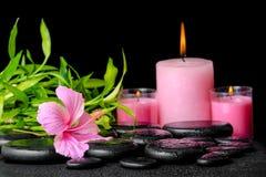 Schöne Badekurortzusammensetzung des rosa Hibiscus blühen, die Bambus Zweige Lizenzfreie Stockfotos