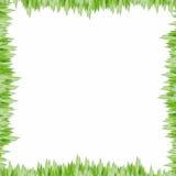 Schöne Bambusblätter stockfoto