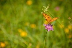 Schöne Basisrecheneinheit auf Blume Lizenzfreie Stockfotografie