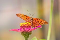 Schöne Basisrecheneinheit auf einer Blume Stockfotos