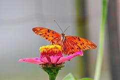 Schöne Basisrecheneinheit auf einer Blume Stockfoto