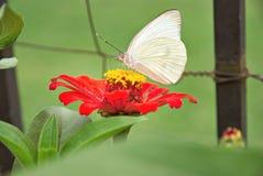 Schöne Basisrecheneinheit auf einer Blume Stockfotografie