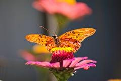 Schöne Basisrecheneinheit auf einer Blume Lizenzfreies Stockbild