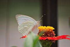 Schöne Basisrecheneinheit auf einer Blume Stockbilder