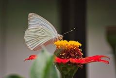 Schöne Basisrecheneinheit auf einer Blume Lizenzfreie Stockfotografie