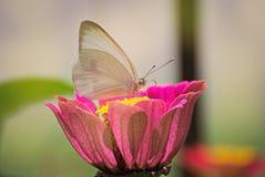 Schöne Basisrecheneinheit auf einer Blume Stockbild