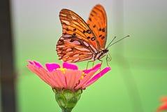 Schöne Basisrecheneinheit auf einer Blume Lizenzfreie Stockbilder