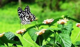 Schöne Basisrecheneinheit, die auf einer Blume sitzt Lizenzfreie Stockfotos