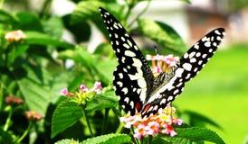 Schöne Basisrecheneinheit, die auf einer Blume sitzt Stockfotos