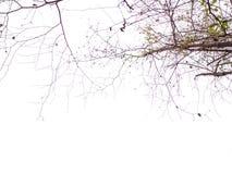 Schöne Baumast-Natur neben tropischem idyllischem Strandozean und weißer Wolkenhimmel in der Ferienzeit stockbild