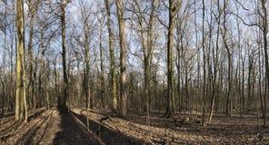 Schöne Baumlandschaft Lizenzfreie Stockfotografie