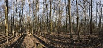 Schöne Baumlandschaft Stockbilder