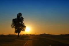 Schöne Baumlandschaft in Dubai-Wüste Stockbild