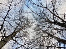 Schöne Baumniederlassungen und bewölkter Himmel Stockbild