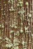 Schöne Baumrinde lizenzfreie stockbilder