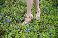 Schöne Beine der Nahaufnahme eines jungen Mädchens in den Schuhen auf einem Teppich von blauen Blumen lizenzfreie stockfotografie
