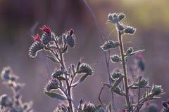 Schöne beleuchtete und farbige Blumen Stockfotos