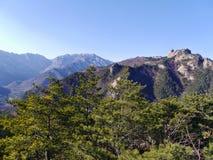 Schöne Berge Seoraksan und Koniferenwald Lizenzfreie Stockfotografie