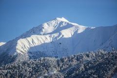 Schöne Berglandschaftsansicht Baumfeld und -schnee SONNENAUFGANG lizenzfreie stockfotografie