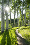 Schöne Bergwandern-Spur durch Aspen Trees von Vail Colorado Stockfotos