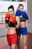 Schöne Berufsboxer, die zusammen stehen Lizenzfreie Stockfotos
