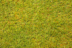 Schöne Beschaffenheit des grünen Grases vom Golfplatz Lizenzfreies Stockfoto