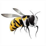 Schöne Biene auf einem weißen Hintergrund stock abbildung