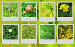 Schöne Bilder von Blumen und von Tieren Lizenzfreies Stockbild