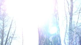 Schöne Birkennahaufnahme in einem Winterwald, mit schönem Sonnengrellem glanz 4K stock video