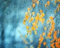 Schöne Birkenzweige mit den älteren Blättern des goldenen Herbstes bedeckt Lizenzfreie Stockbilder