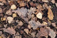 Schöne Blätter Lizenzfreie Stockfotografie